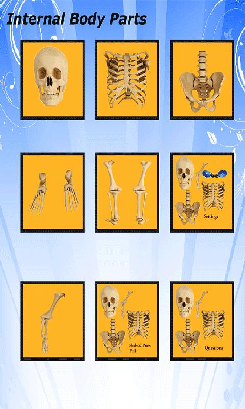 Body Parts - Internal