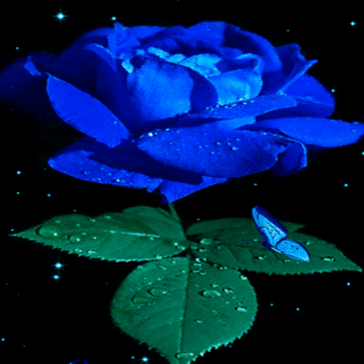 Blue Rose Beauty LWP