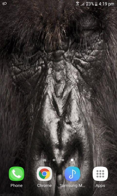 Gorilla Eyes Live Wallpaper