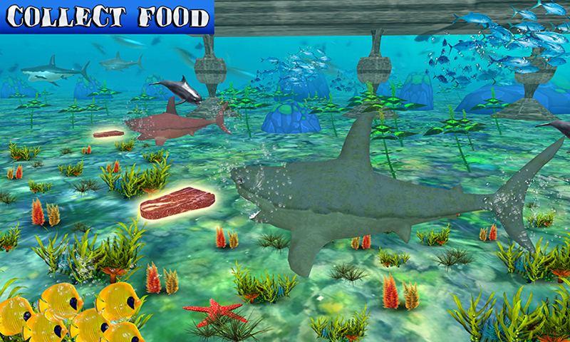 Big Shark Vs Small Sharks
