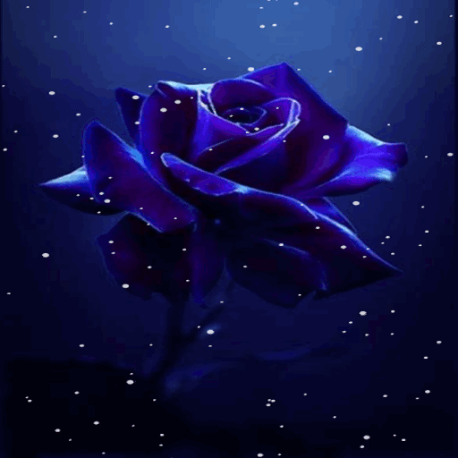 Dark Blue Rose LWP