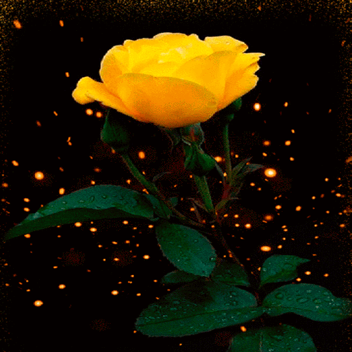 Yellow Shine Rose LWP