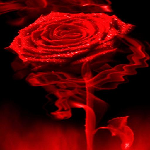 Fiery Red Rose LWP