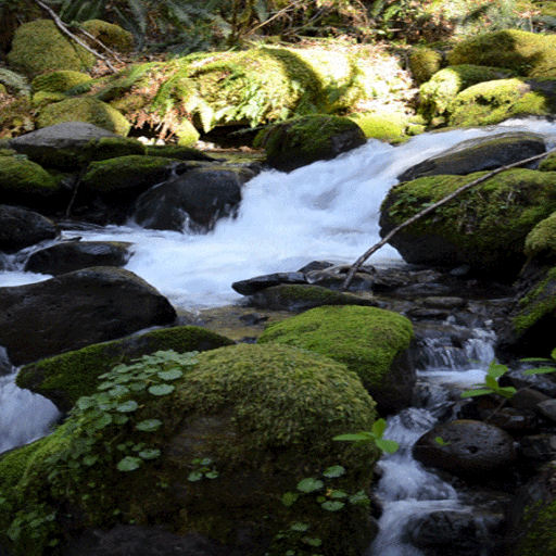 Nature Rocky Water LWP