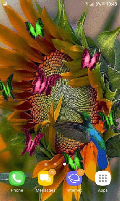 Sunflower Butterflies LWP