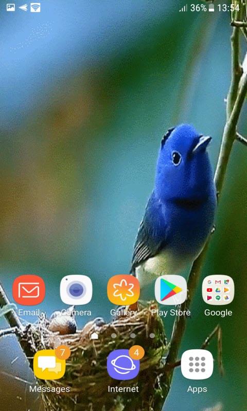 Bird Childs Live Wallpaper