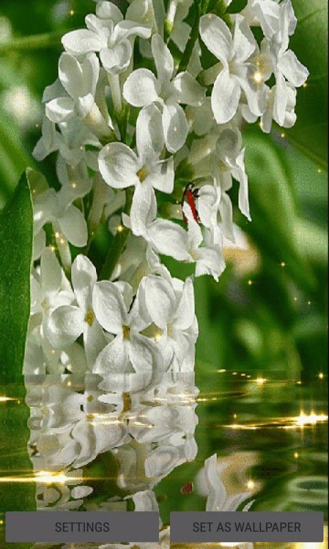 White Magic Flowers LWP