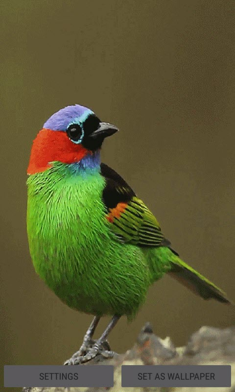 Colorful Bird Live Wallpaper