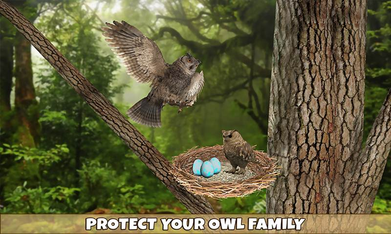 Wild Owl Bird Family Survival