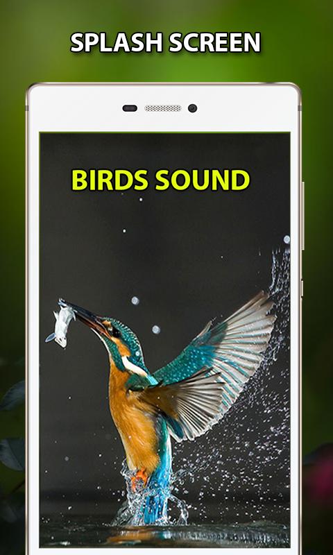 Loud Bird Sounds – Relaxing Bird Chirping