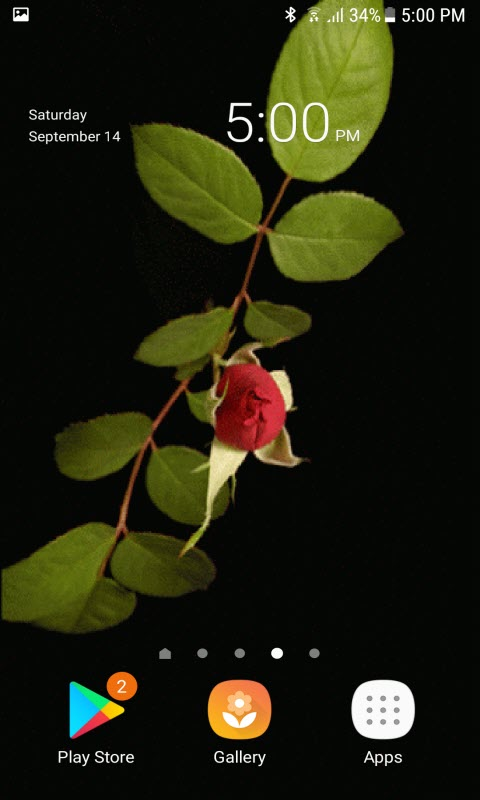 Rose With Leafs LWP