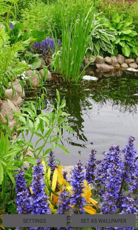 Rainy Garden Plants LWP