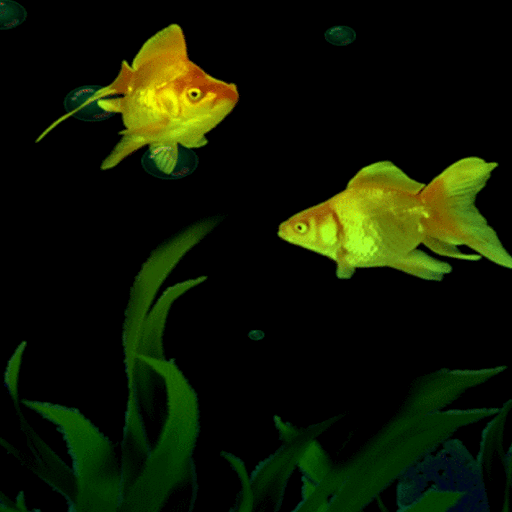 Golden Fishes Live Wallpaper