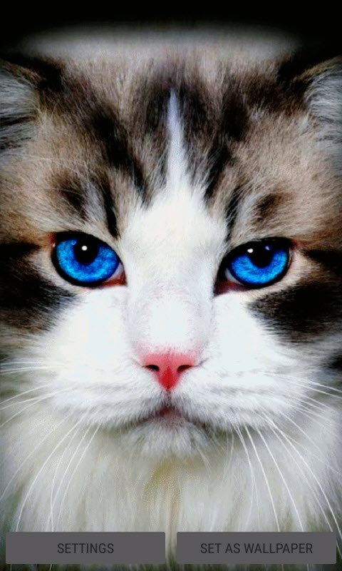 Blue Eyes Cat LWP
