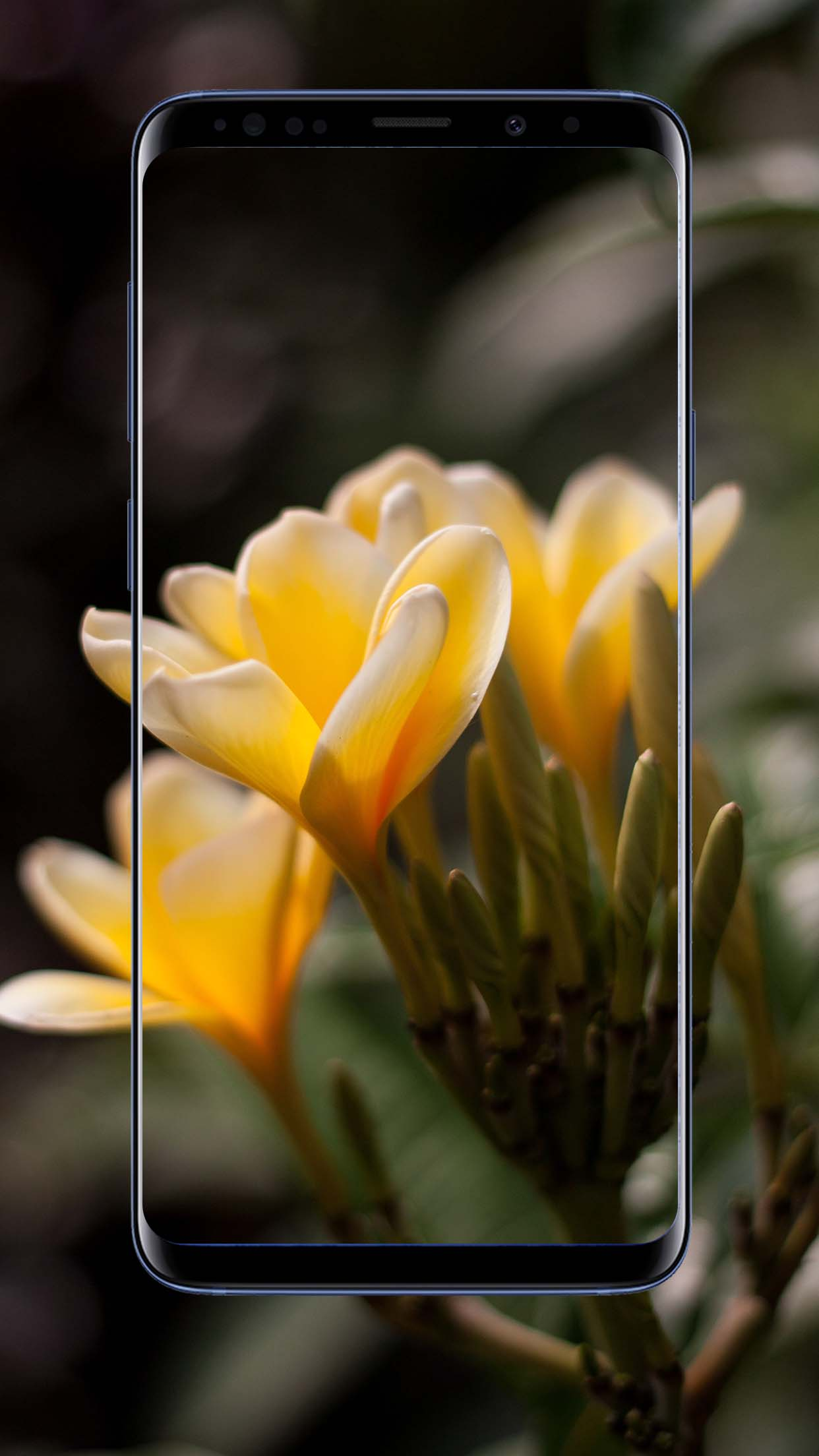 Crocus Flower Wallpapers