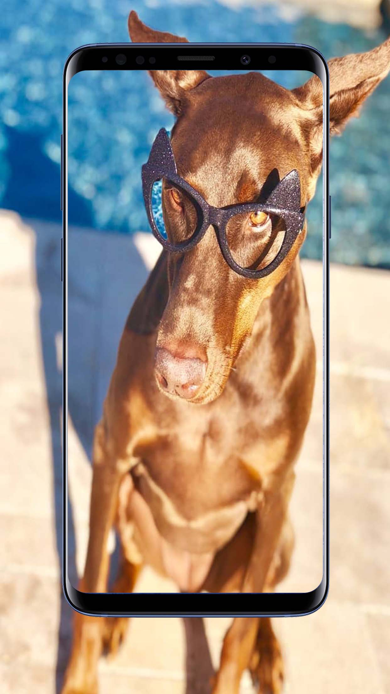 Doberman Dogs Wallpapers and Backgrounds