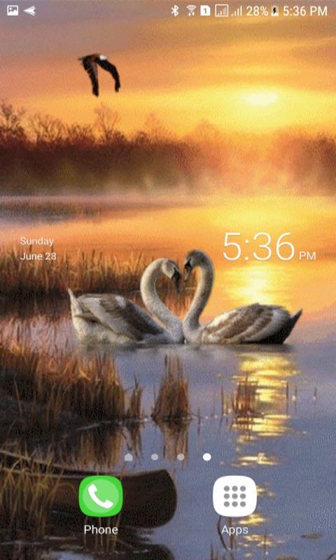 Evening Swan Love LWP