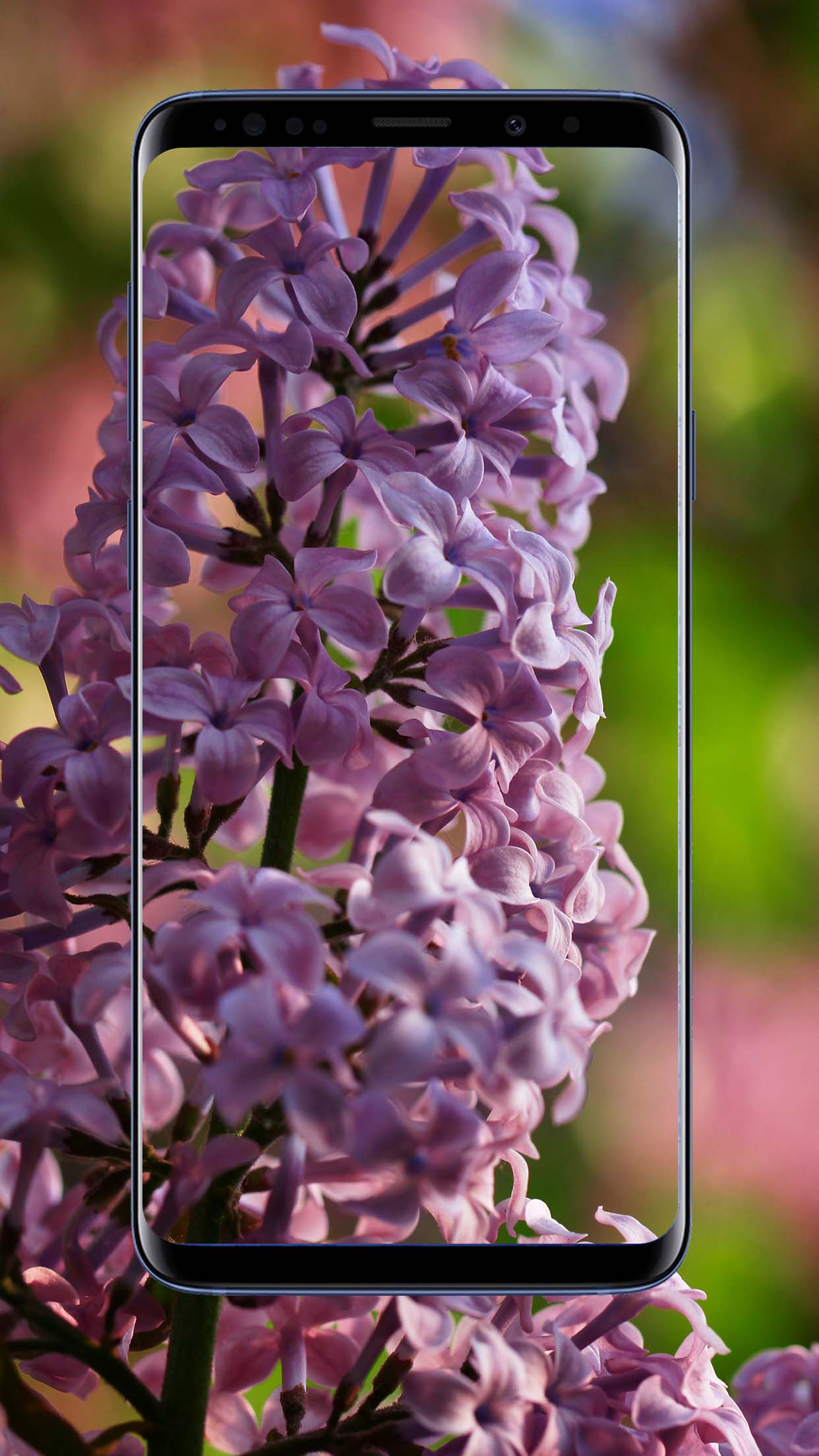 Lilac Flower Wallpapers