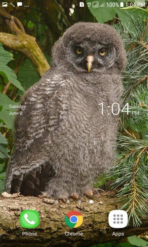 Owl Watching Live Wallpaper