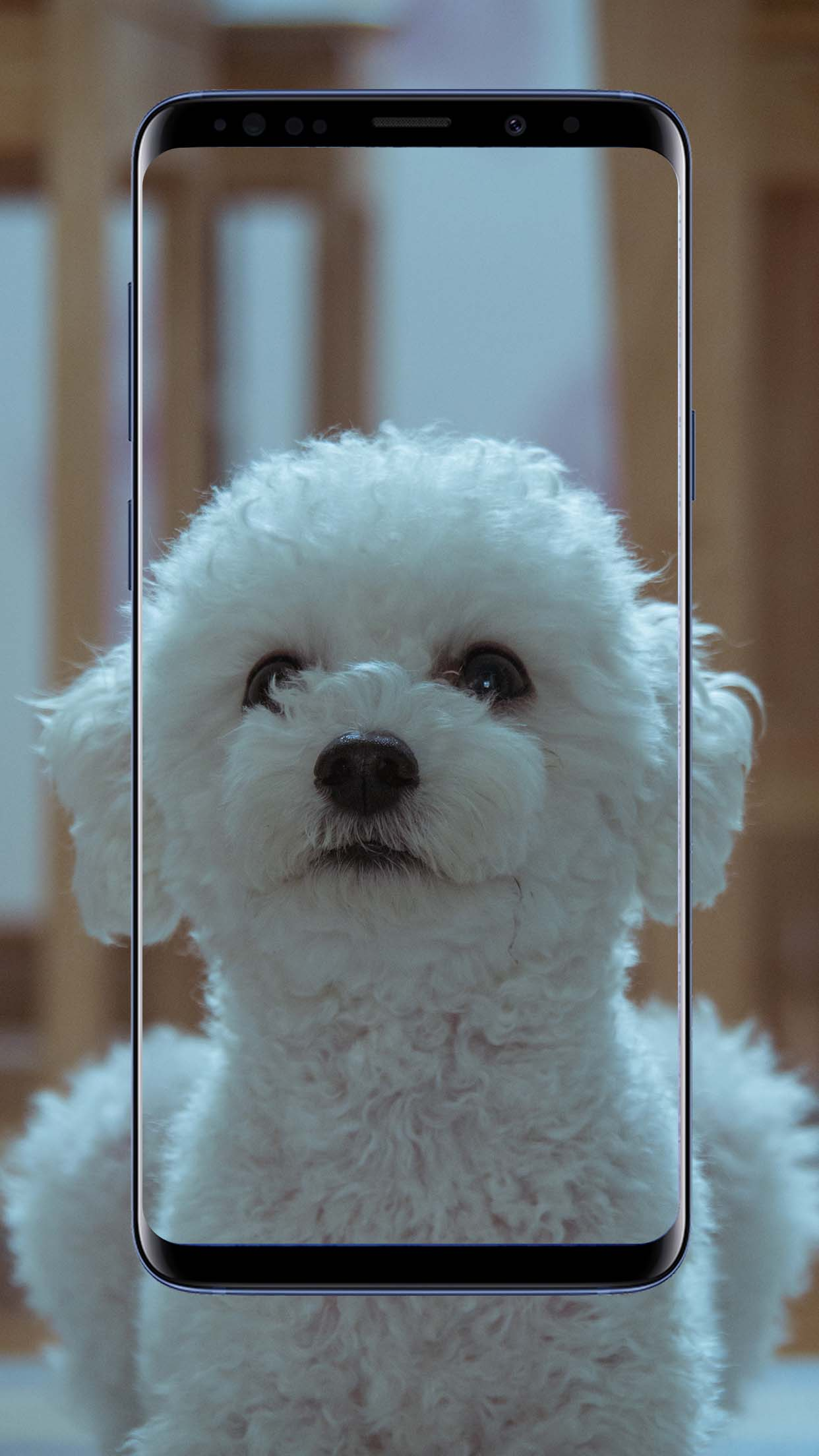 Poodle Dog Wallpapers