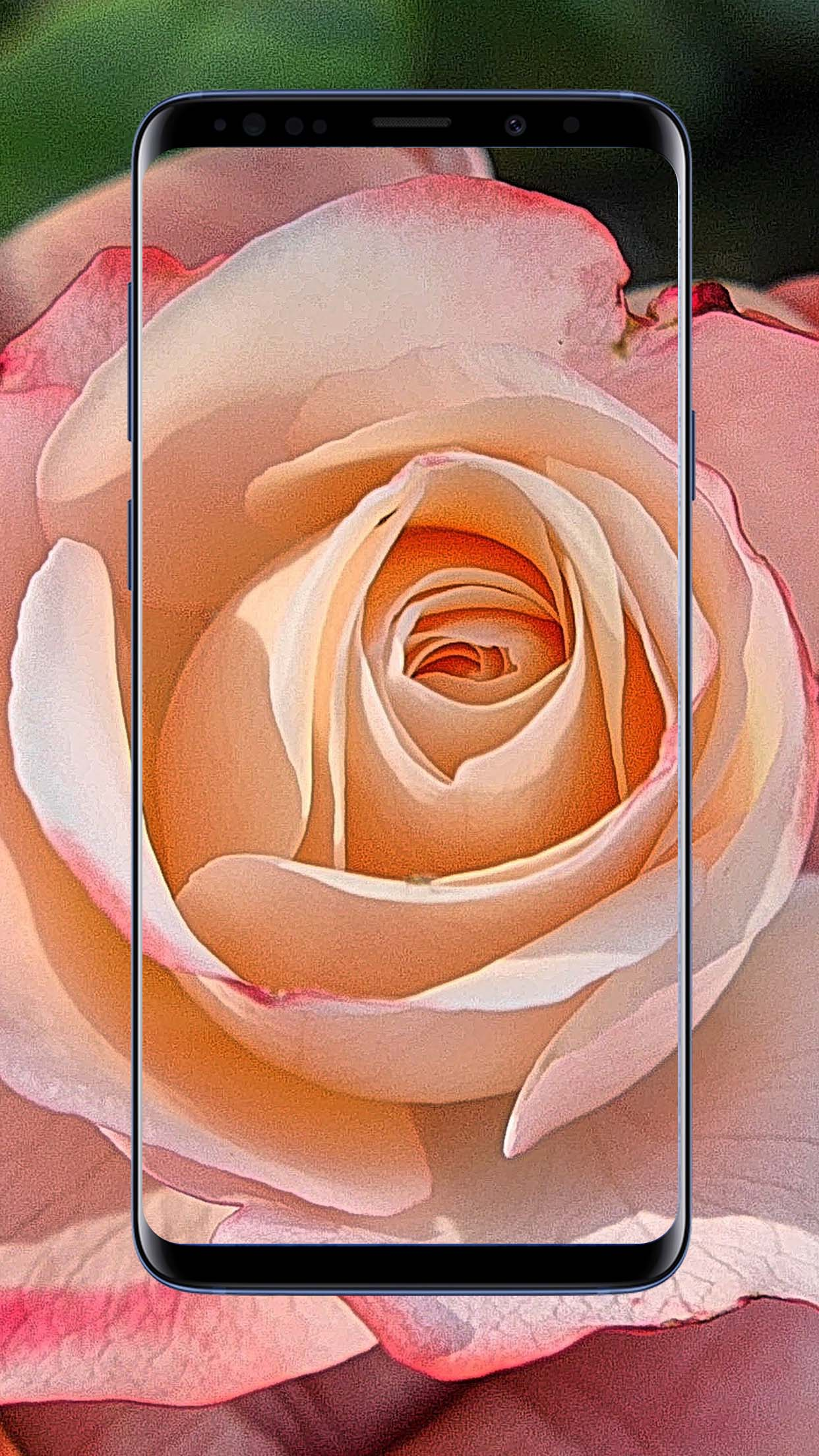 Rose Flower Wallpapers ,Floral,Background