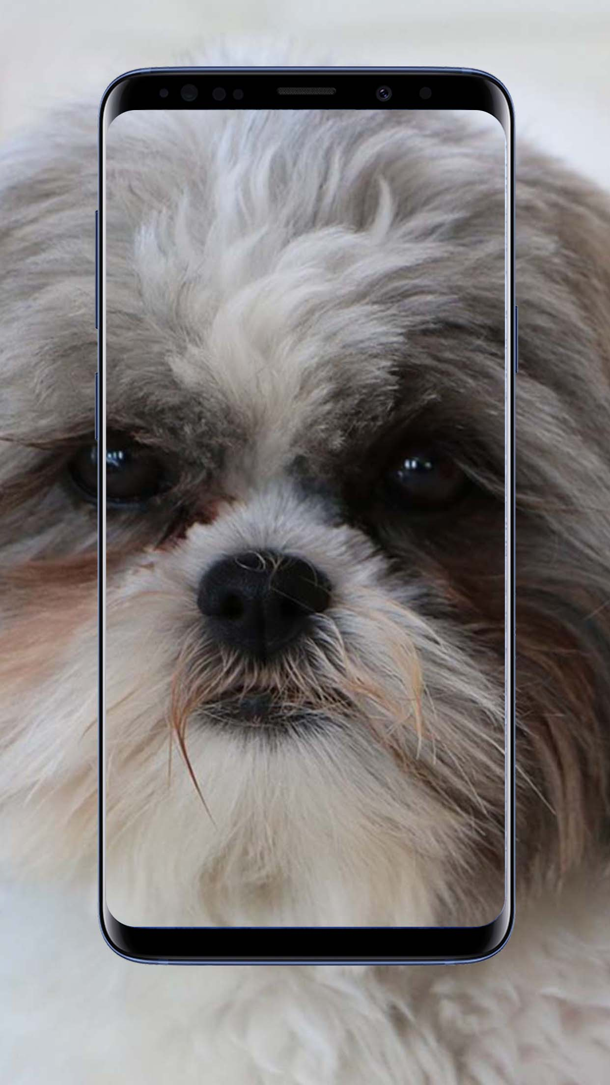 Shih Tzu Dog Wallpapers