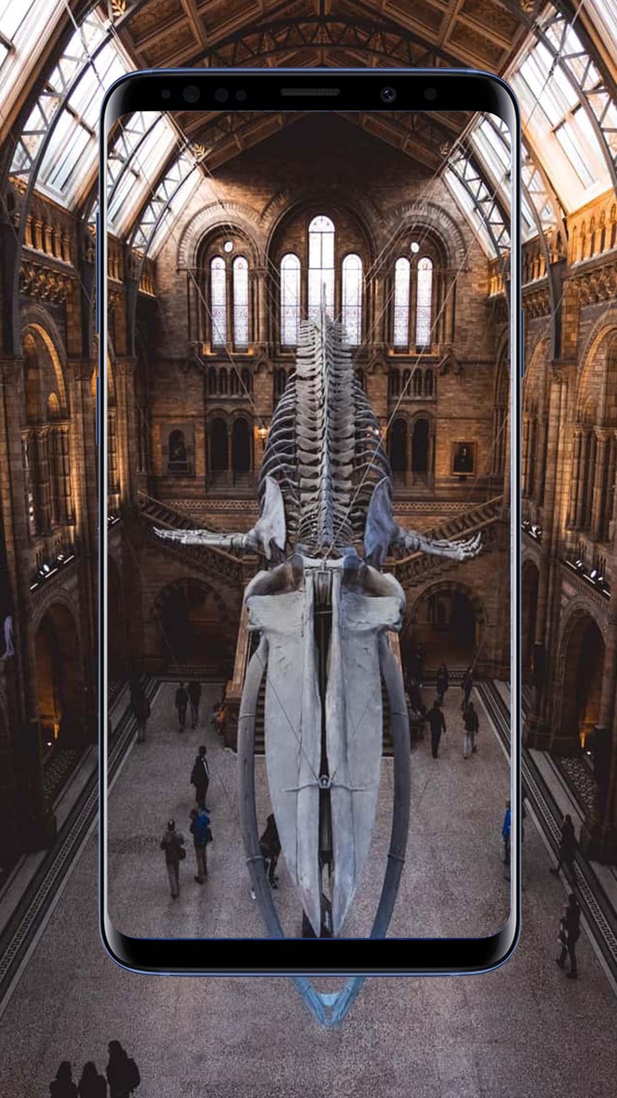 skeleton wallpaper