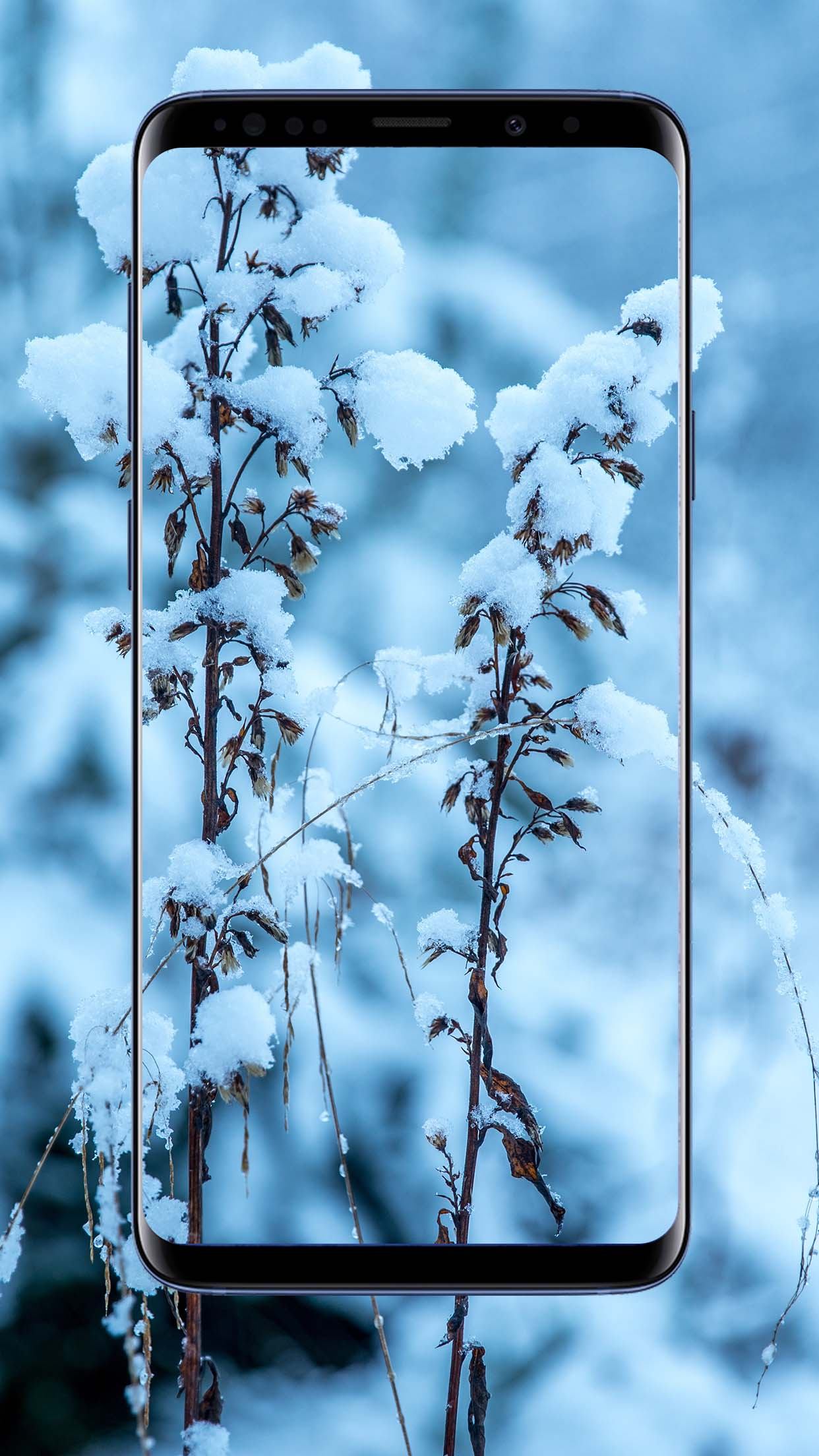 Snow Wallpapers and Backgrounds