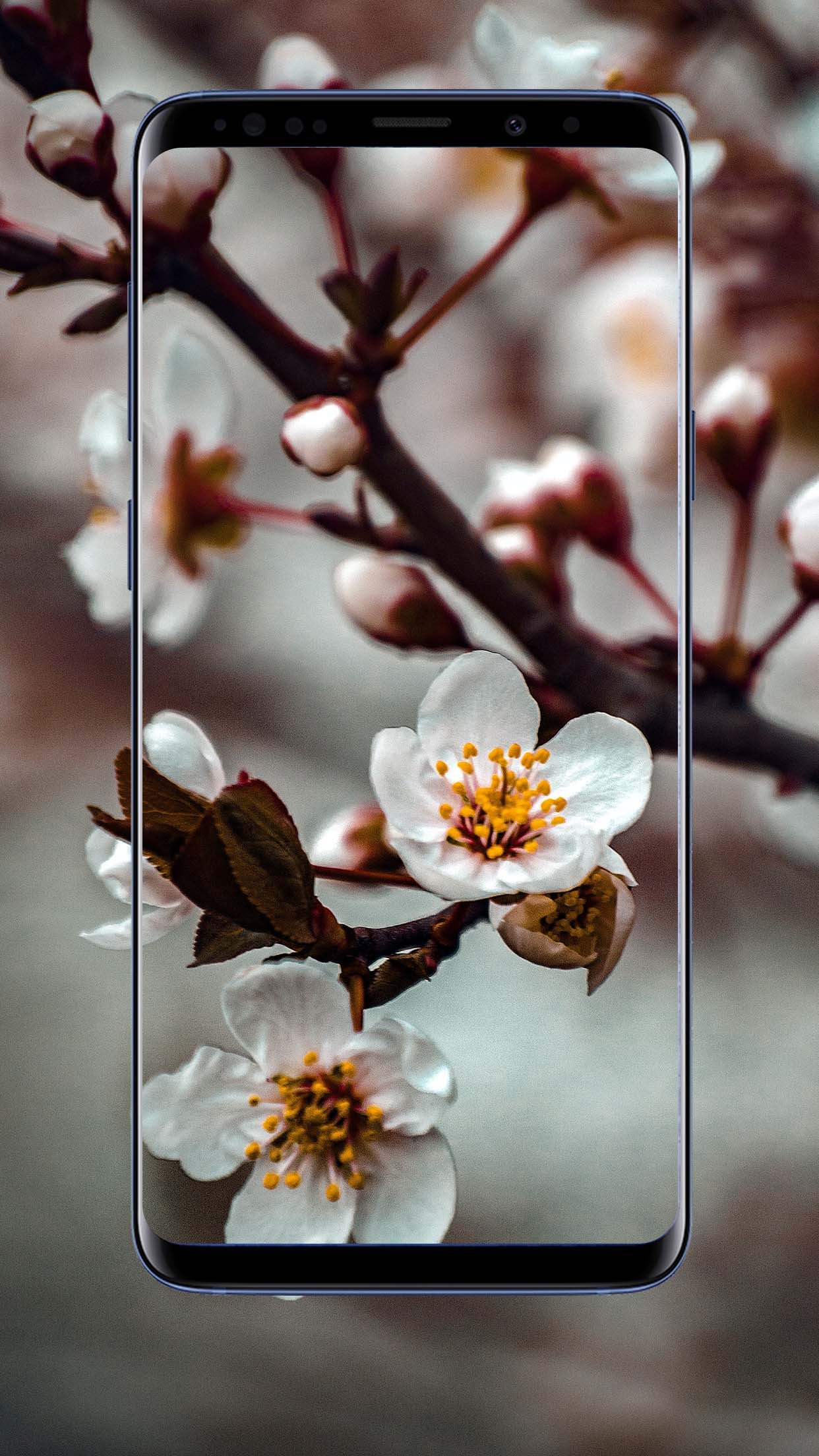 Spring Wallpapers and Backgrounds